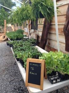 starter plants for sale sign